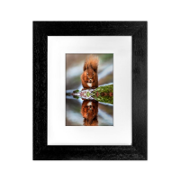 Red Squirrel Framed Print FB_04_5x7